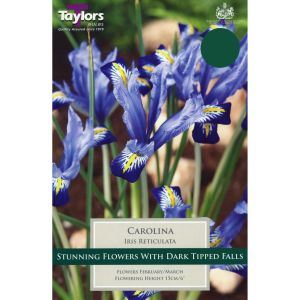 Taylors 15 Carolina Iris Reticulata Bulbs