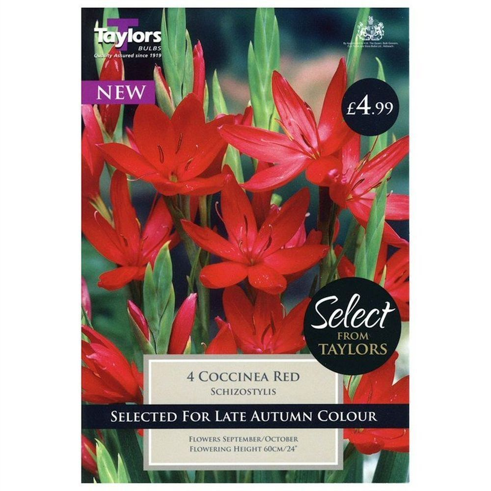 Taylors 4 Schizostylis Coccinea Red Bulbs