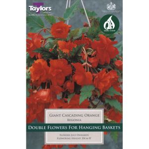 Taylors 3 Begonia Giant Orange Pendula Tubers