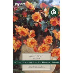 Taylors 2 Begonia Aztec Gold Exotic Summer Flowering Tubers