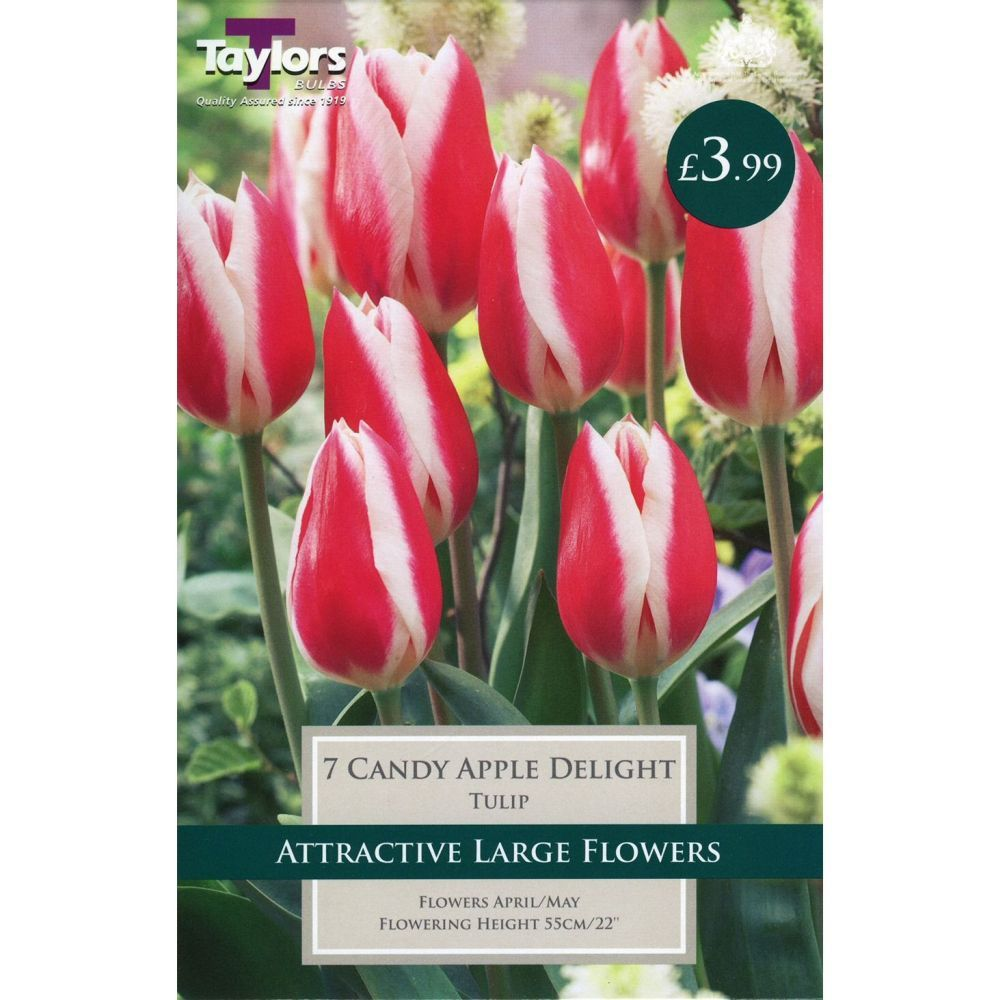 Taylors 7 Candy Apple Tulip Bulbs
