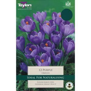 Taylors 15 Purple Crocus Bulbs