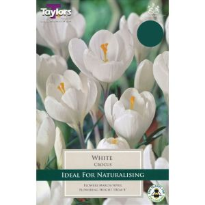 Taylors 12 White Crocus Bulbs