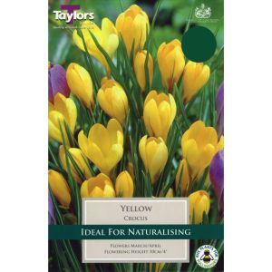 Taylors 12 Yellow Crocus Bulbs