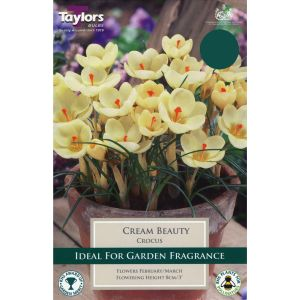 Taylors 15 Cream Beauty Crocus Bulbs