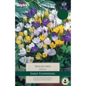 Taylors 20 Species Mix Crocus Bulbs