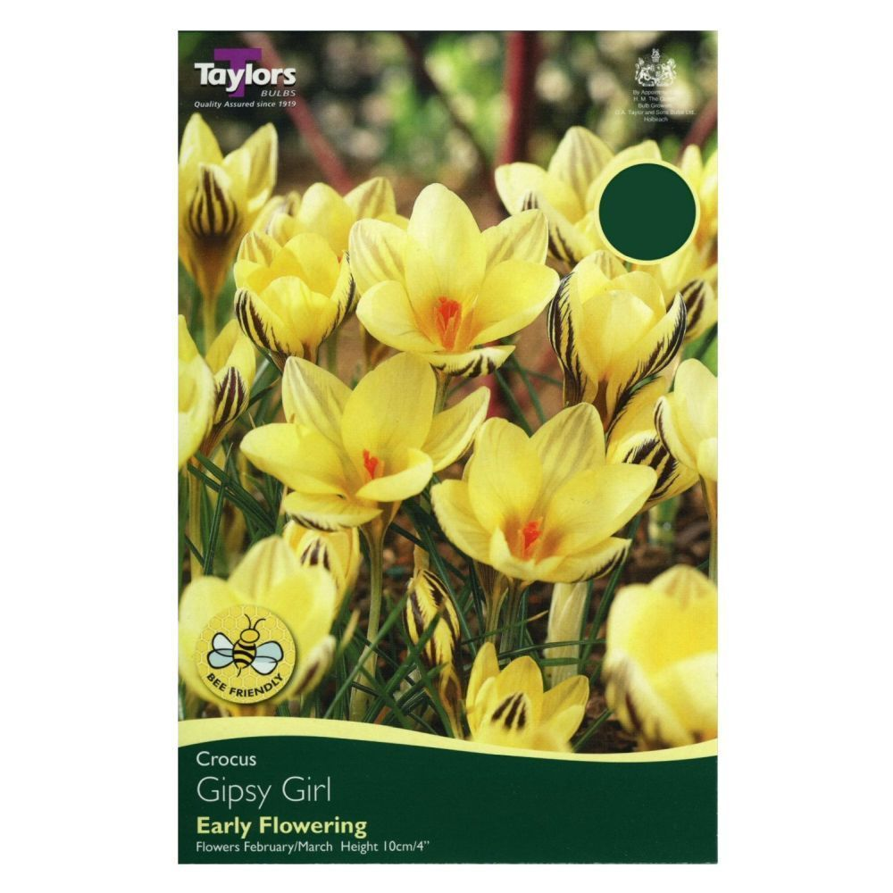 Taylors 10 Crocus Gipsy Girl Bulbs