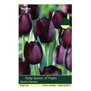 Taylors 7 Queen of Night Tulip Bulbs