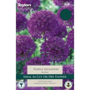 Taylors 5 Allium Purple Sensation Bulbs