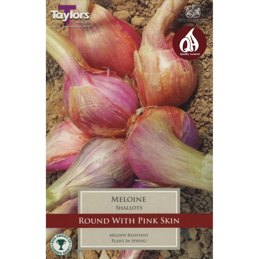 Taylors 10 French Shallot Meloine