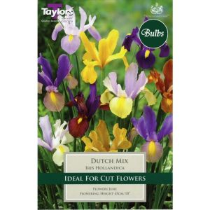 Taylors 25 Dutch Mix Iris Hollandica Bulbs
