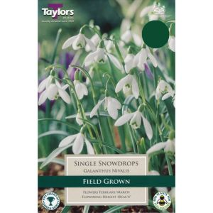 Taylors 12 Single Snowdrops Galanthus Nivalis Bulbs