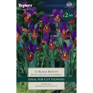 Taylors 12 Black Beauty Dutch Iris Bulbs
