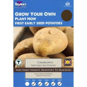 Taylors 10 Casablanca First Early Seed Potatoes
