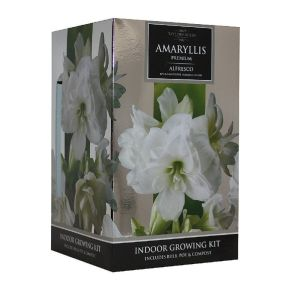 Taylors Amaryllis Alfresco Growing Kit