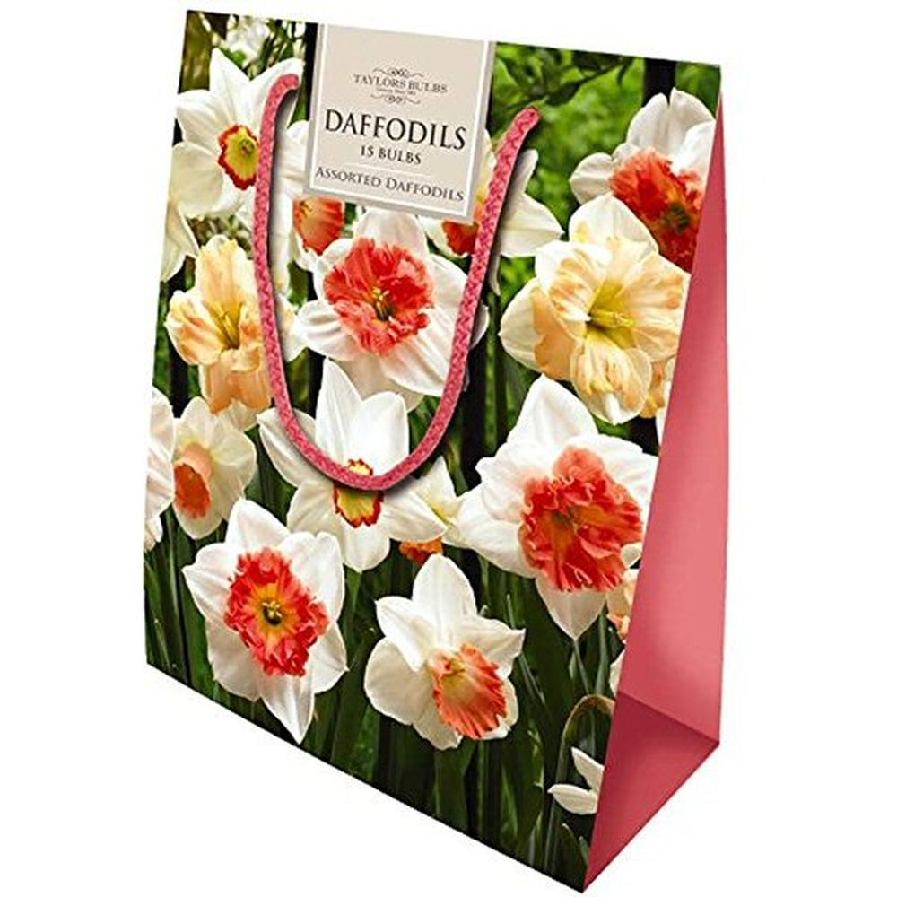 Taylors 15 Assorted Colours Daffodil Bulbs Gift Bag