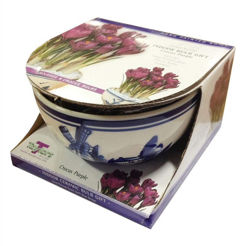 Taylors 9 Purple Crocus Delft Bowl Indoor Bulb Gift Set