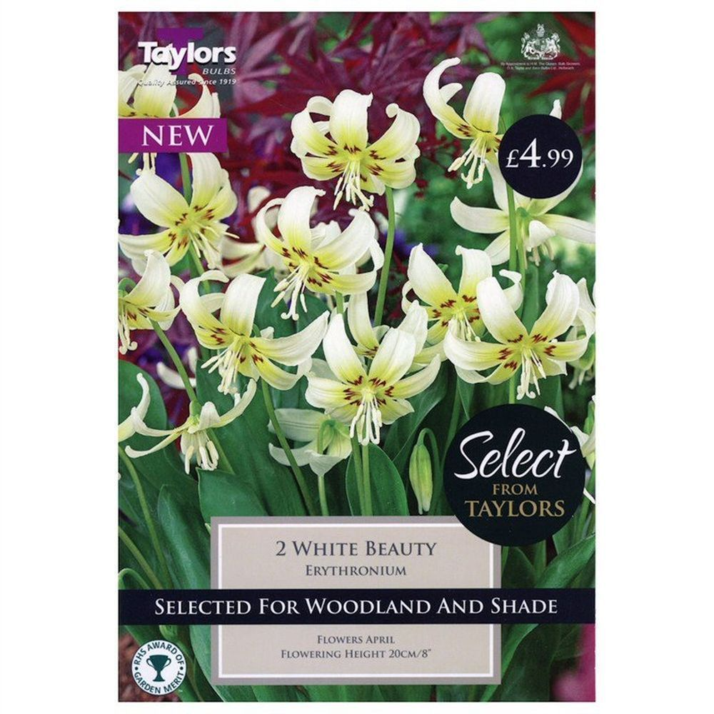 Taylors 2 White Beauty Erythronium Bulbs