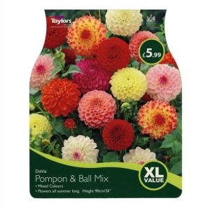 Taylors 4 Dahlia Pompon & Ball Mix Summer Flowering Tubers