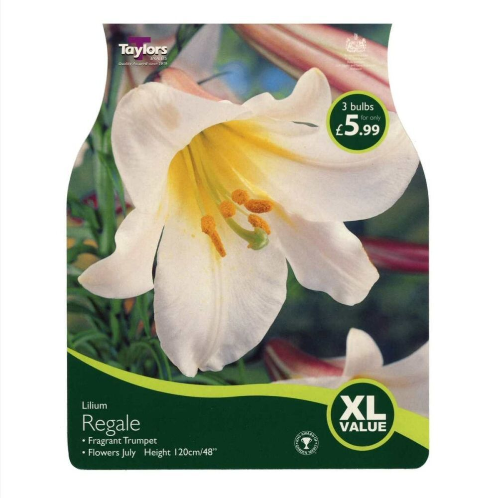 Taylors 4 Lily Regale Summer Flowering Bulbs