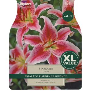 Taylors 6 Lily Stargazer Summer Flowering Bulbs