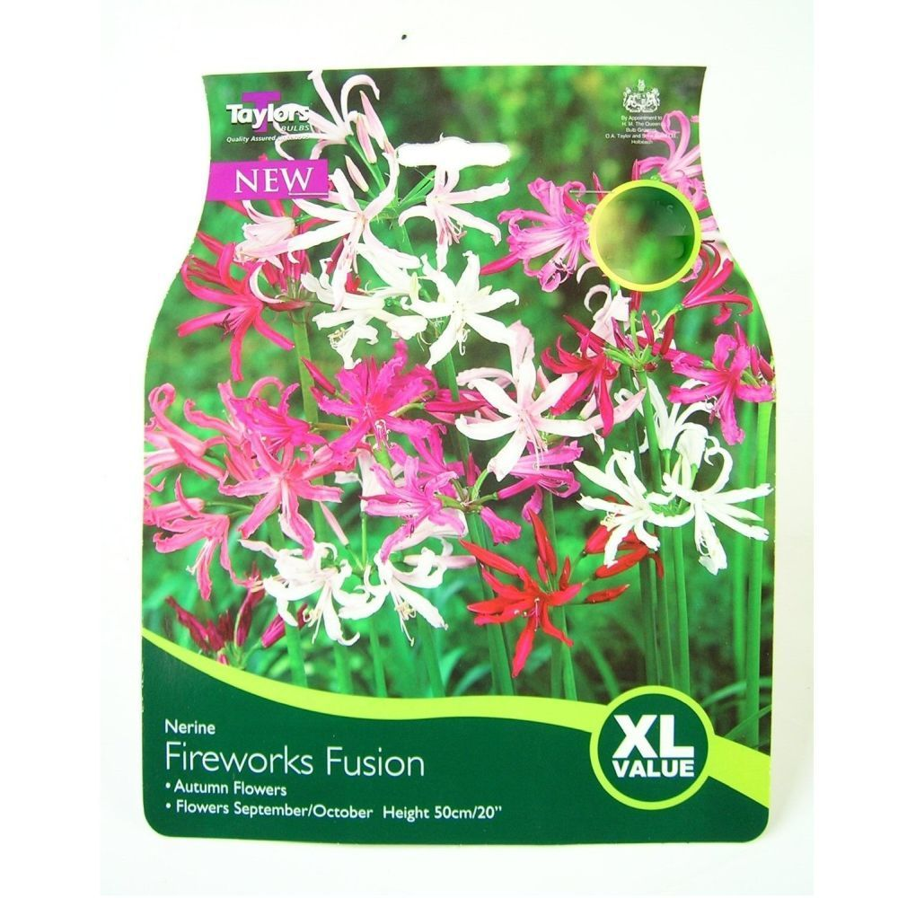 Taylors 5 Nerine Fireworks Fusion Mixed Bulbs