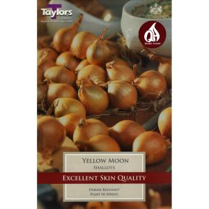 Taylors 12 Shallot Yellow Moon Bulbs