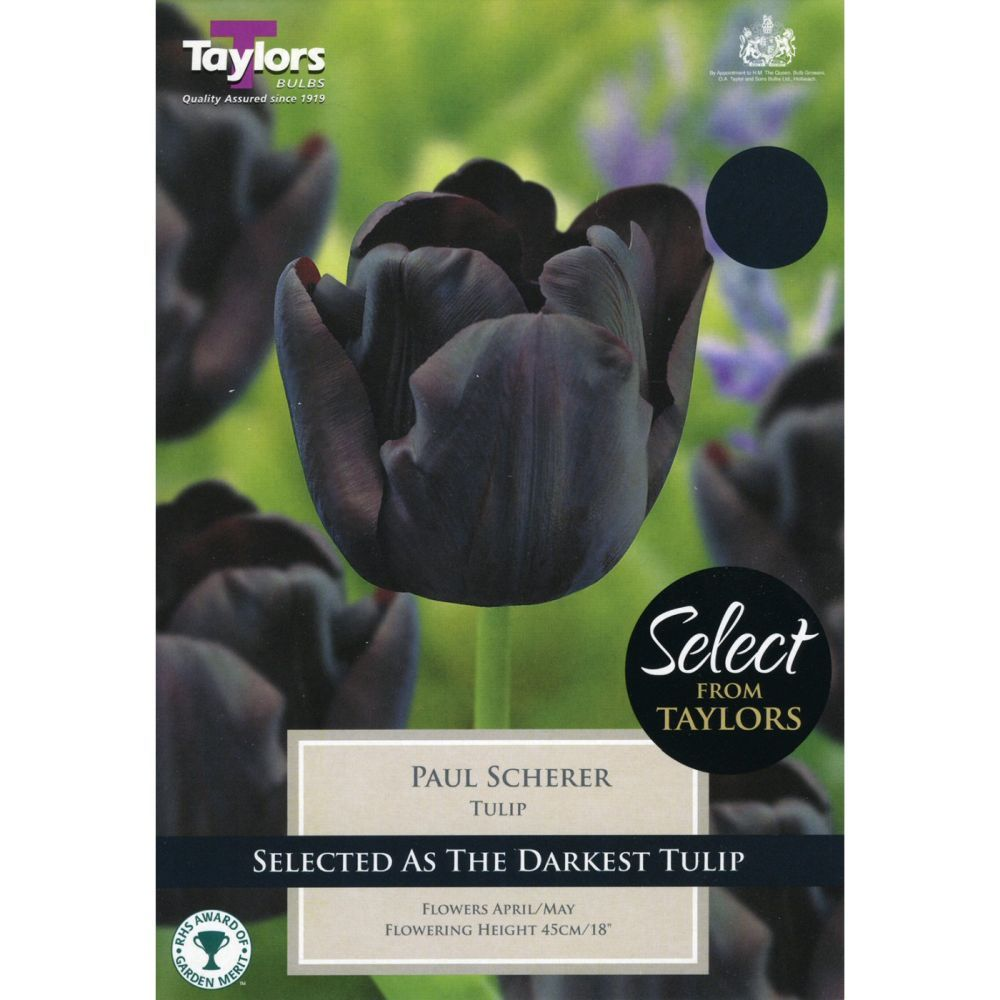 Taylors 10 Paul Scherer Tulip Bulbs