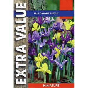 Taylors 30 Dwarf Mixed Iris Bulbs