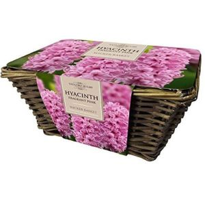 Taylors Large Wicker Basket with 6 Pink Fragrant Hyacinth Bulbs