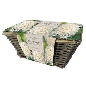 Taylors Large Wicker Basket with 6 White Fragrant Hyacinth Bulbs