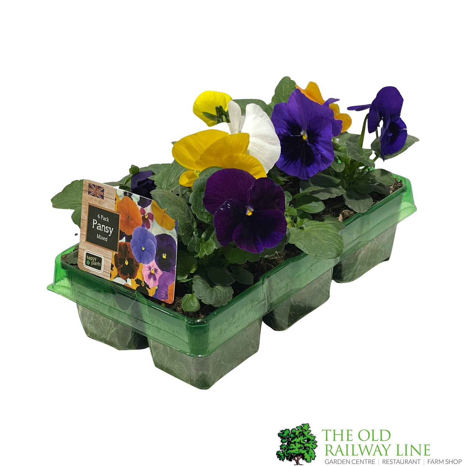 Pansy Plants Assorted Six Pack