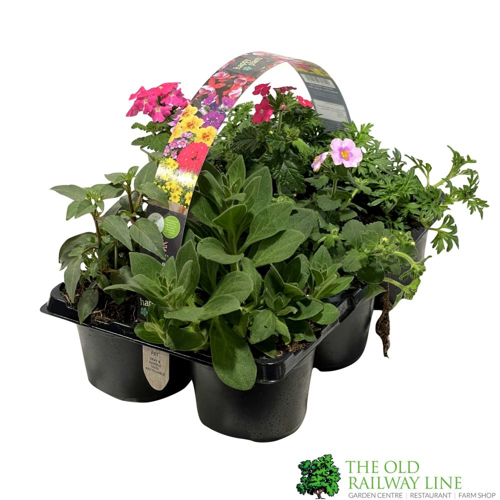 Mixed Basket Plant Pack 6 - Click and Collect Only