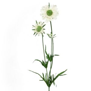 64cm Aritificial Cream Scabiosa Spray