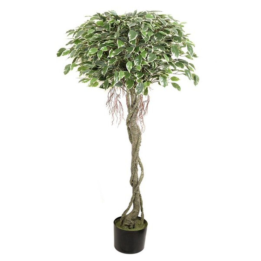 152cm Variegated Potted Viscus Ball