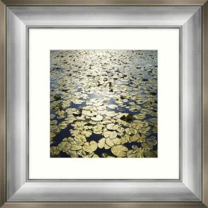 Artko 54 x 54cm 'Lakeland Lilies II' Framed Print by Mike Shepherd - MP93