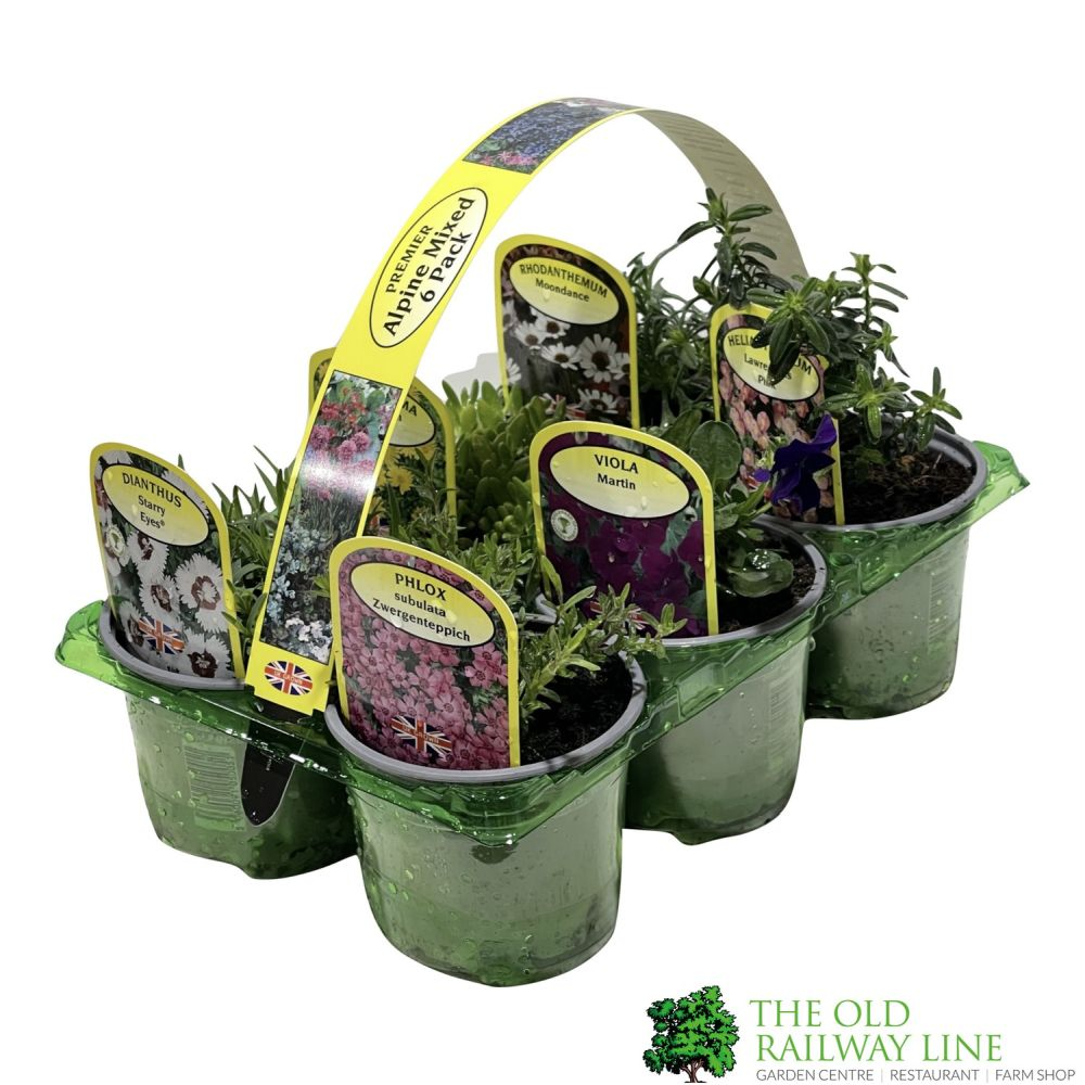 Alpines Assorted Pack of Six
