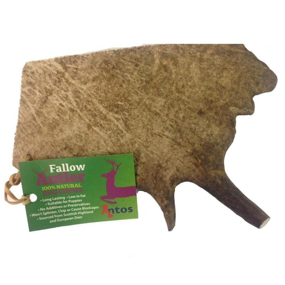 Antos Large Fallow Antler