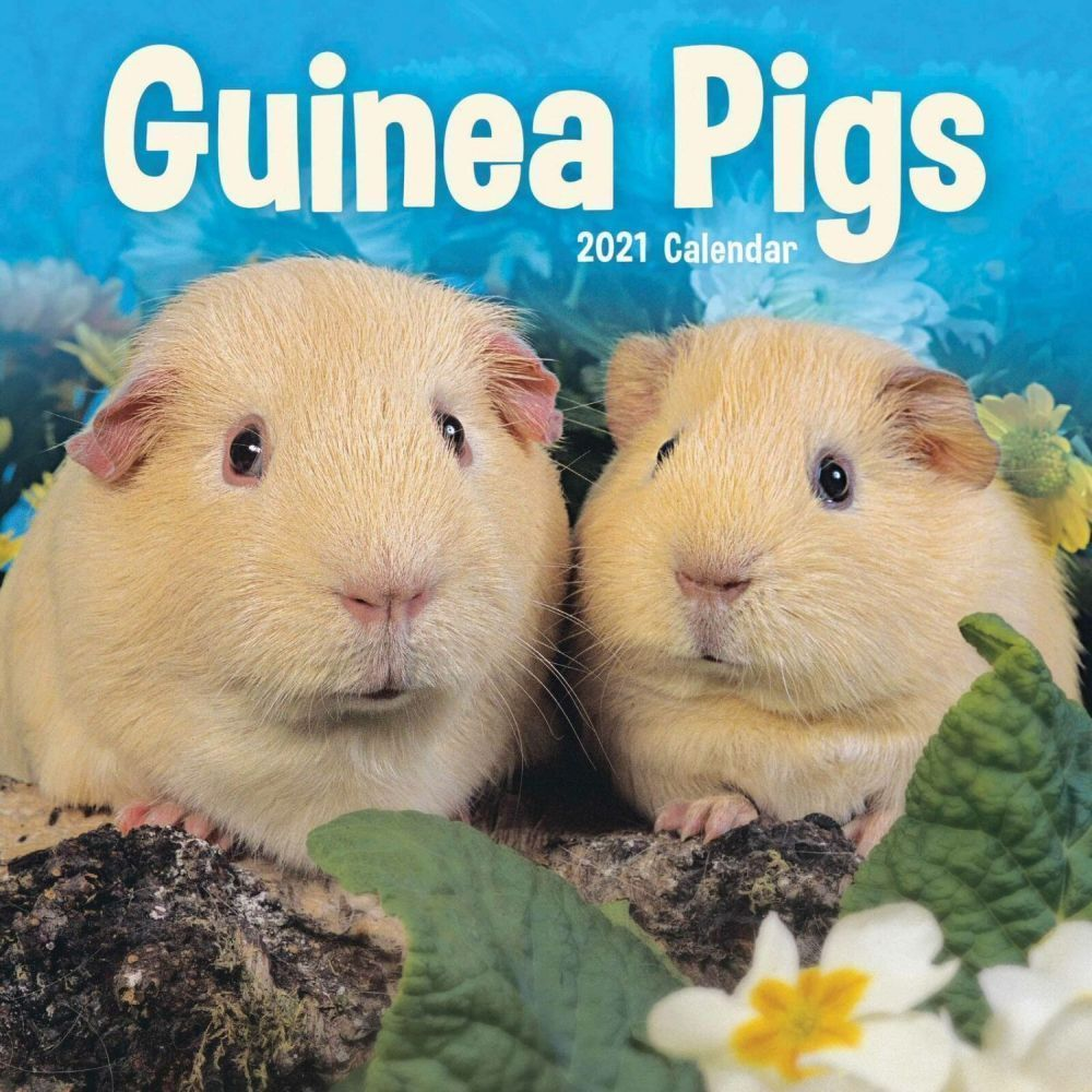 Guinea Pigs 2021 Mini Wall Calendar